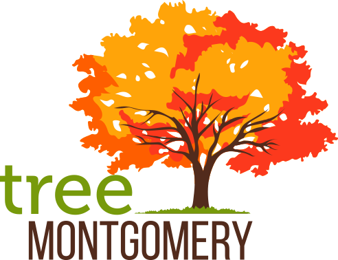 Tree Montgomery